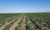 Aprobaron plan de riegos para ciclo agrícola 2021-2022